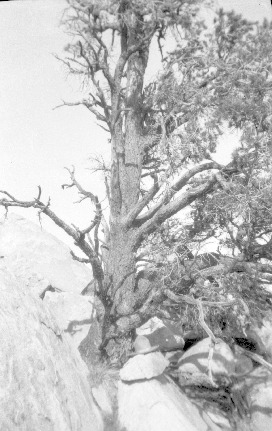 H_Mansfield_negs_45_tree_on_rock_in_Crooked_Cr_17DEC0118.pdf