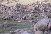 cow_camp_evening_Su71_17DEC0503.pdf