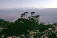 Sierras_from_Choc_Mt_Feb70_17DEC0334.pdf