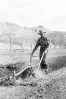 Merritt_Holloway_plowing_garden_BH_17DEC0520.pdf