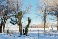 plg_snow_ds_dec_1970_002_17DEC0182.pdf