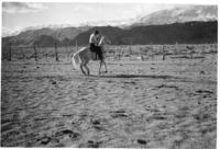 Cowboy_on_horse-141014-0026_17DEC0268.pdf